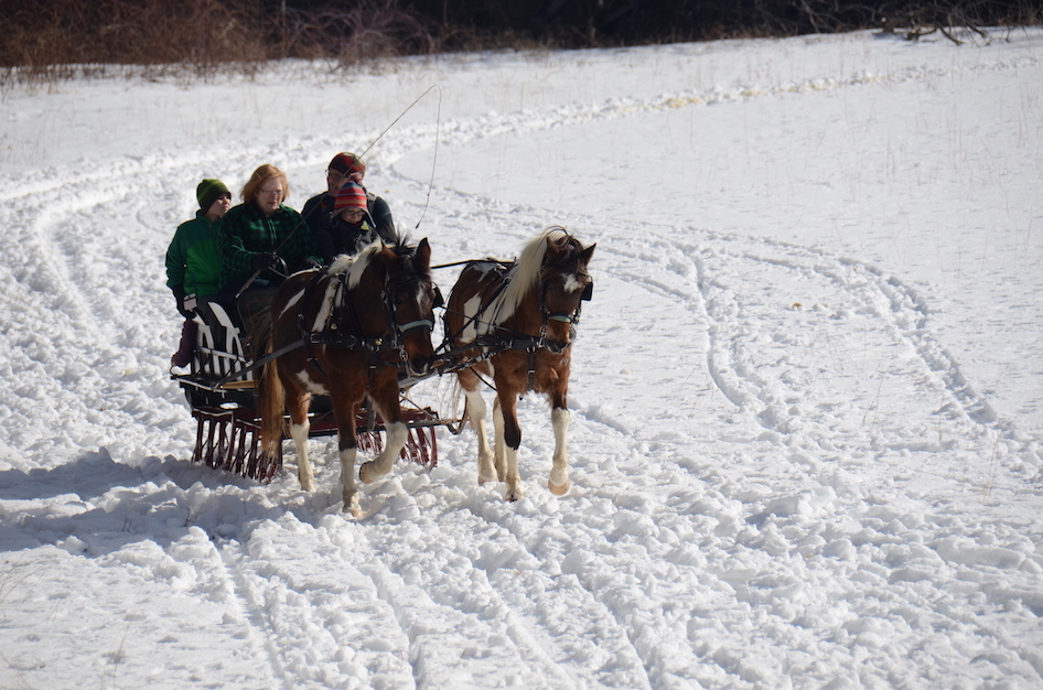 Pony pair Sleigh carriage ponies