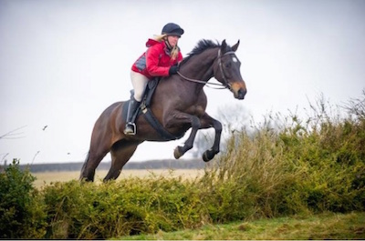 Barehoof Jumping Horse