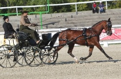 Horse Carriage Riding arena driving trial