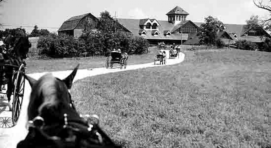1998 harness horse carriages picnic