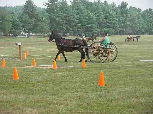 cones driving Course play competition horse cart