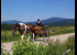 Horse Meadowbrook road cart mountain view