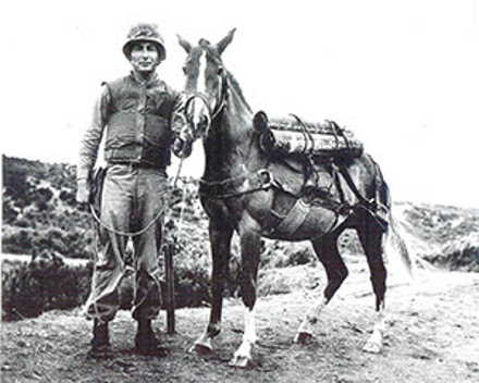 staff-sergeant-reckless-horse
