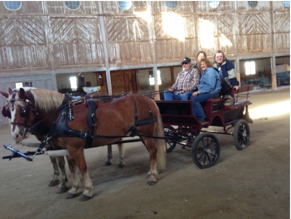 Hafllingers driving pair in Breeding Barn