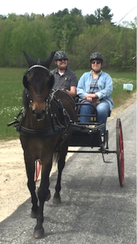CarriageHorseCartDougAndrea