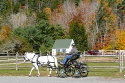 Laurie and Nick starting a drive at Acadia, pony cart.