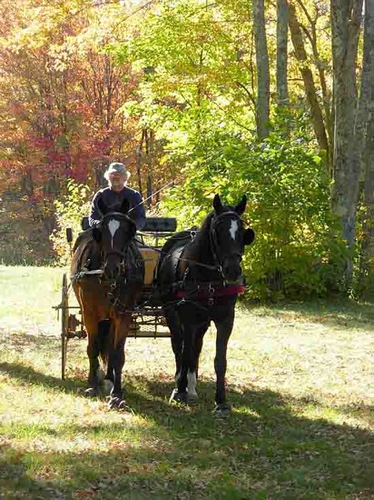 Carriage driving pair of horses, fall foliage outing in Hancock, NH