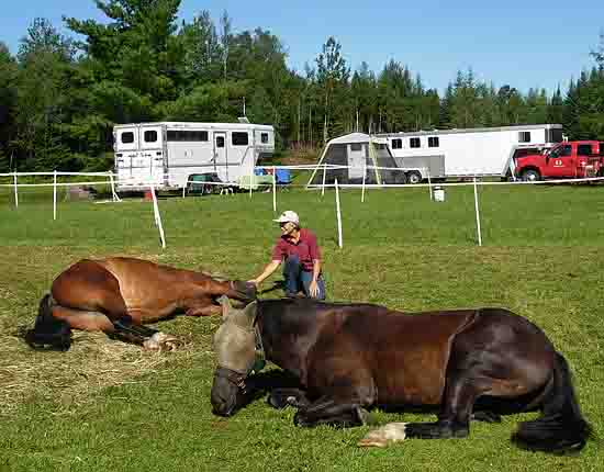 Horses lying down after rough day climbing hills in Northeast Kingdom, VT