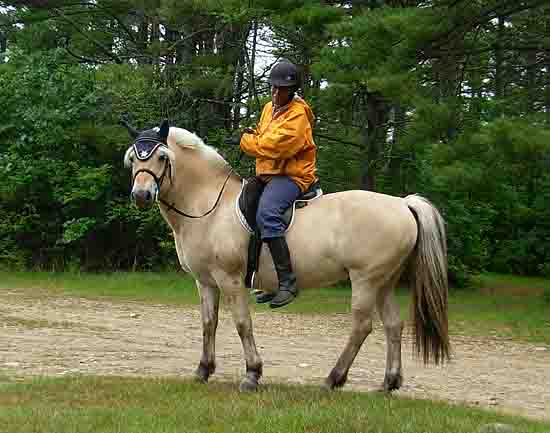 Granite State Carriage club member rides her Fjord in Lyndeboro, NH