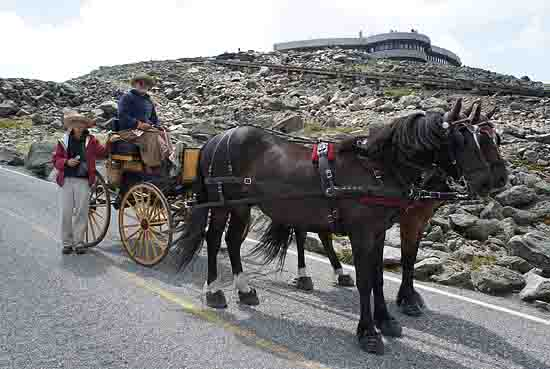 Horses Mount Washington Carriage Day