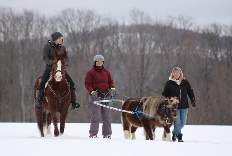 Miniature Horses playing in Snow Games GSCA Horse Driving club