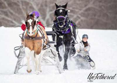Horses Sleighing and Skijoring on Snowboard Granite State Carriage Assoc.