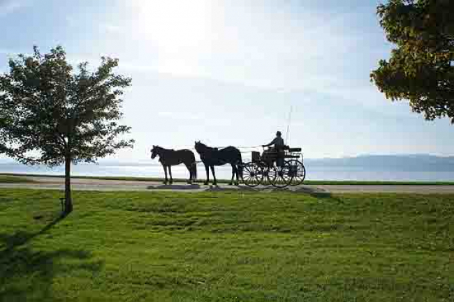 Horses Tandem driving carriage pair Vermont