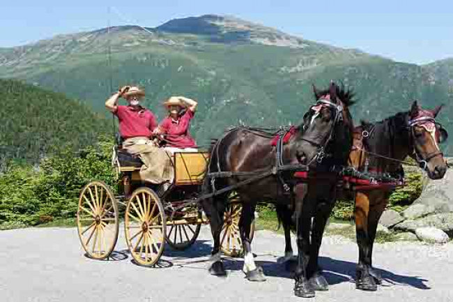 Horses Mount Washington New Hampshire Carriage Days