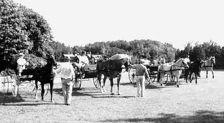 2000 carriage horses wedding party