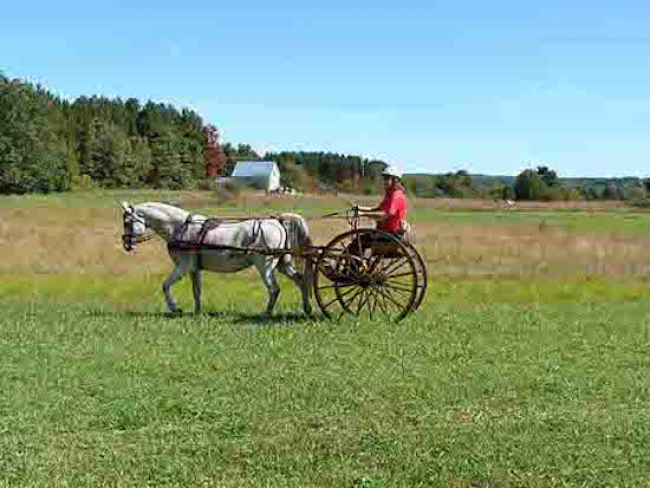 Pony Cart Driver carriage drive