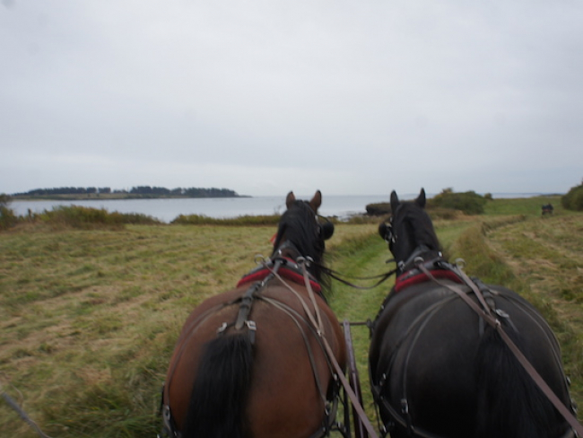 Horse Pair oceanside Maine