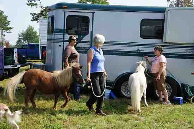 miniature mini Horses horse trailer