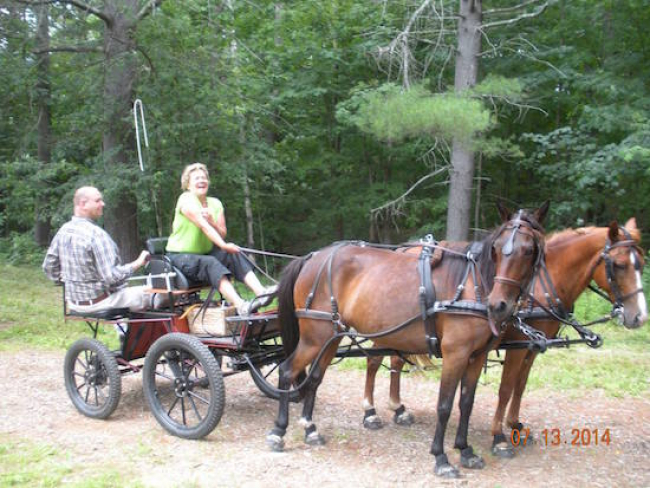 Adaptive Carriage harness horse driving
