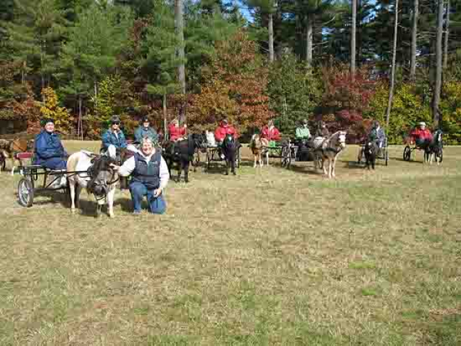 Mini horses and mini carts Granite State Carriage club